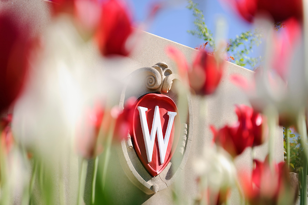 Red tulips with wisconsin crest